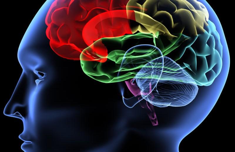 braingraphic-800x800